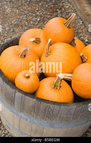 barrel of ripe orange pumpkins, closeup - Stock Photo