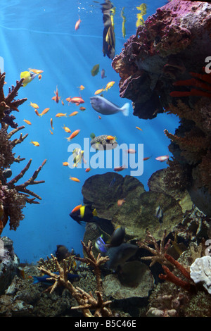Marine Fish - Tropical Coral Reef [L'Aquarium Barcelona, Moll d'Espanya del Port Vell, Barcelona, Catalonia, Spain, - Stock Photo