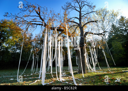 Neighborhood pranksters have covered this large tree in toilet paper Millvale Pennsylvania - Stock Photo