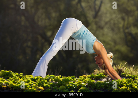 A young woman practices yoga doing the dog pose in Makena, Maui, Hawaii. - Stock Photo