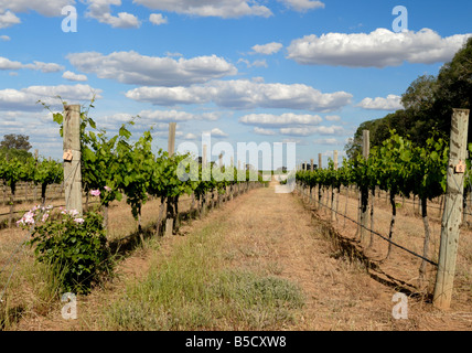 Panoramic view of a vineyard in Victoria, Australia in late afternoon - Stock Photo