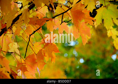 Leaves changing colour stock photo royalty free image for When will the leaves start changing 2017