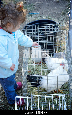 Child Feeds Chickens in a Cage at Petting Zoo - Stock Photo
