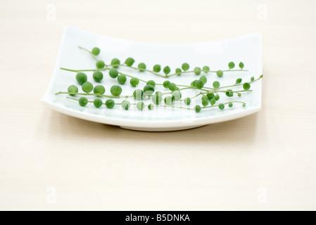 Vines (Senecio Rowleyanus) on curved plate - Stock Photo
