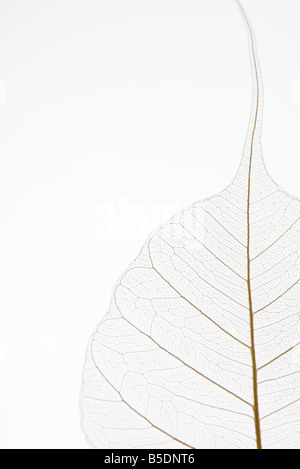 Translucent leaf, close-up, cropped - Stock Photo