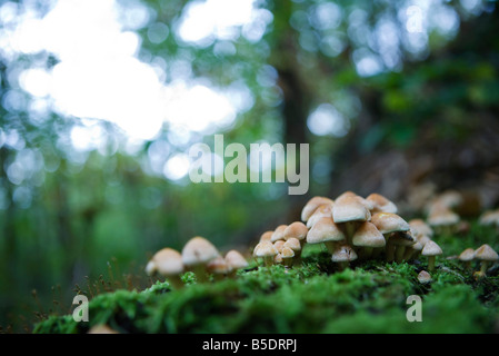 Cluster of mushrooms on the forest floor - Stock Photo