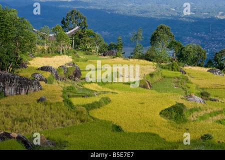 Tongkonan House and Terraced Rice Fields in Tana Toraja on Sulawesi in Indonesia - Stock Photo