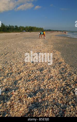 Shell collecting on Bowman's Beach, Sanibel Island, Florida, USA, North America - Stock Photo