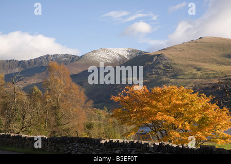 Acer tree in autumn colour in valley with mountains of Nantlle Ridge in Snowdonia National Park. Nantlle Gwynedd - Stock Photo