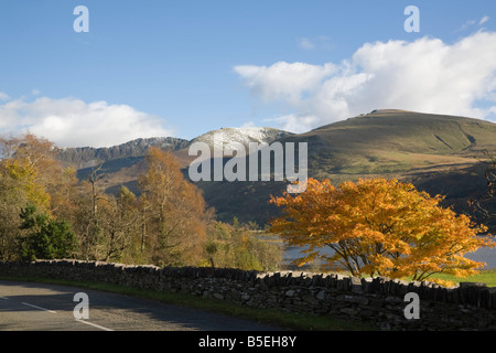 Nantlle Gwynedd North Wales UK Acer tree in autumn colour in valley with mountains of Nantlle Ridge in Snowdonia - Stock Photo