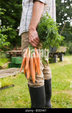 Man holding bunch of carrots, low section, close-up - Stock Photo