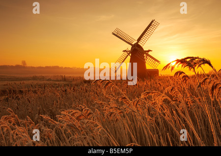 Hoar Frost reeds covered in ice cystals at sunrise with Herringfleet windmill in the background on the Norfolk & - Stock Photo