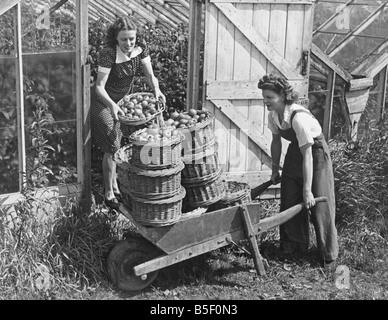 Land Army girls give a hand in collecting the first tomato crop at North Hubbard's nursery in Essex during the Second - Stock Photo