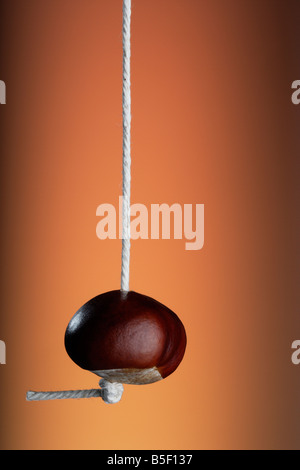 A Horse Chestnut Conker on a string - Stock Photo
