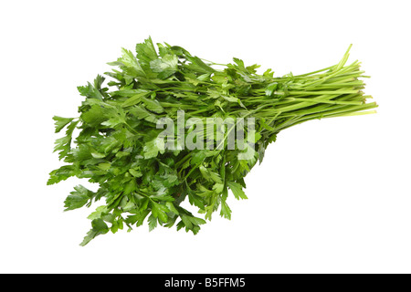 Bunch of cilantro cutout on white background - Stock Photo