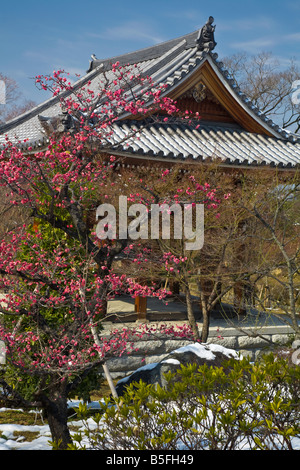 Kyoto City Arashiyama District Japan Chishaku in temple buddhist roof line with flowering plum blossoms - Stock Photo