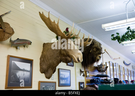 Animal heads mounted on wall in tourist souvenir shop in Sitka, Alaska - Stock Photo