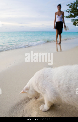 A white stray cat walking in front of a tourist on a white sand beach in The Maldives - Stock Photo