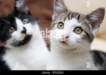 2 young male cats (brothers) - Stock Photo