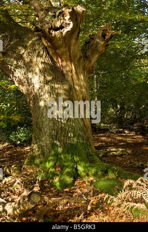 A dead tree, UK. - Stock Photo
