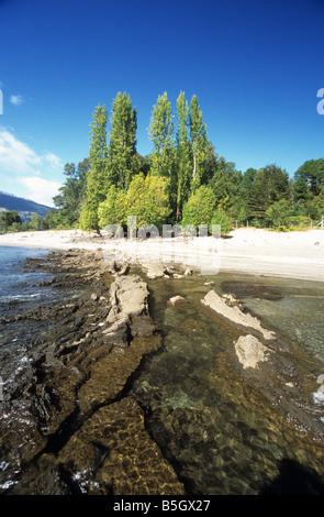 Poplar trees on shore of Lake Caburga, near Pucon, Chile - Stock Photo