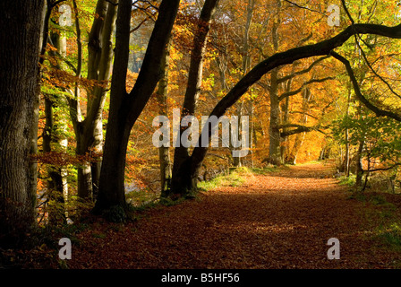 leaf covered forest walk in autumn - Stock Photo