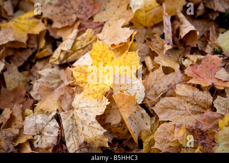 Herbstlaub am Boden, autumn leaves - Stock Photo
