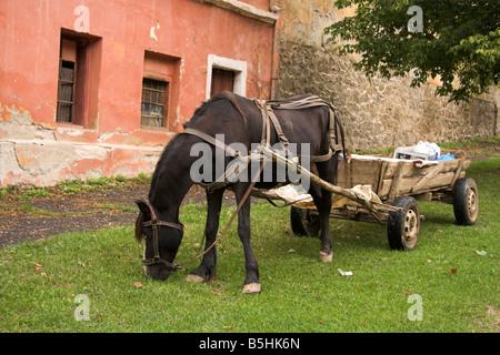 Horse and cart, Cisnadioara, near Sibiu, Transylvania, Romania - Stock Photo