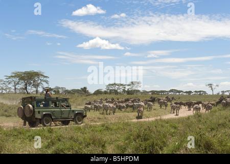 Visitors on safari watching the Zebra migration at Seronera in Serengeti Tanzania - Stock Photo