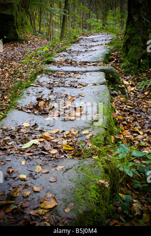 Flagged road in Arncliff Wood Glaisdale North York Moors England - Stock Photo