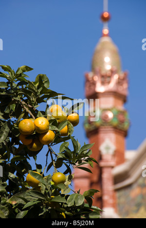 Oranges growing on a tree in front of former market hall Mercado de Colón in the city of Valencia Spain - Stock Photo