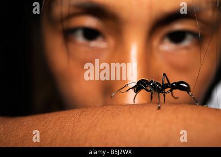 Isula or Bullet Ant Paraponera clavata