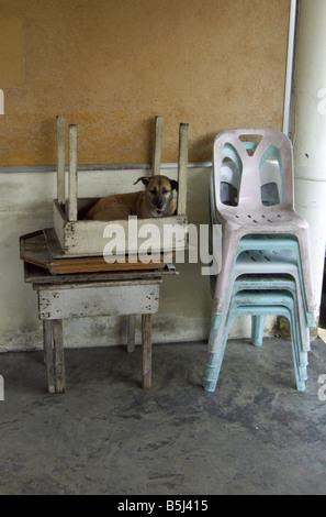 A dog sits inside an upturned table at Wat Lat Krabang in Bangkok, Thailand. - Stock Photo