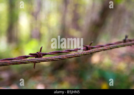 Close up shot of rusty barbed wire against a blurred background of muted autumn colours. - Stock Photo