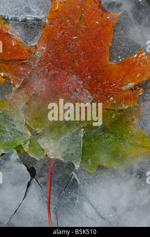 Fallen autumn leaf in a frozen pool - Stock Photo