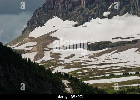 People hiking along snow trail in alpine zone near Logan pass Glacier National Park Montana - Stock Photo
