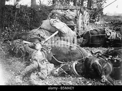 2 G55 W1 1918 18 Dead German horse World War I 1918 History World War I Western Front A German army munitions cart - Stock Photo