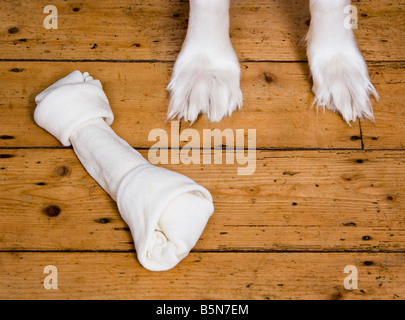 Feet of Borzoi and dog chew high angle view - Stock Photo
