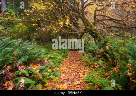 Forest path in Fall located off the Newton B. Drury Scenic Byway in Prairie Creek Redwoods State Park - Stock Photo
