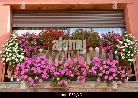 Flowers in a window - Stock Photo