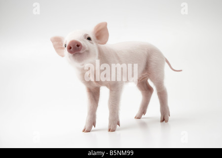 Pink piglet - Stock Photo
