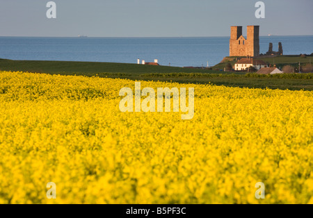 Field of yellow blossoming flowers with Reculver towers on the background, kent, United Kingdom - Stock Photo