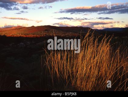 Sun setting on Spinifex Grass Landscape,Pilbara, Northwest Australia - Stock Photo