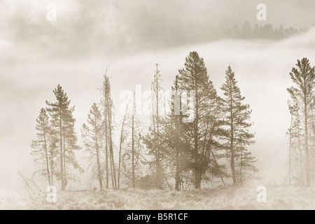 early morning mists rising from the yellowstone river - Stock Photo