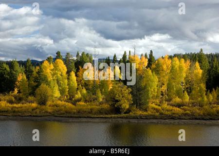 Aspen trees golden with autumn color, Snake River, Oxbow Bend, Grand Teton National Park, Wyoming, USA - Stock Photo
