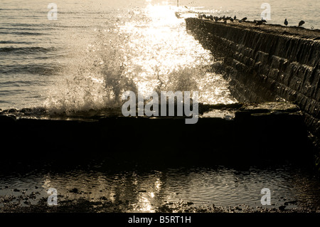Waves crashing over the groyne sea defences at Dawlish - Stock Photo