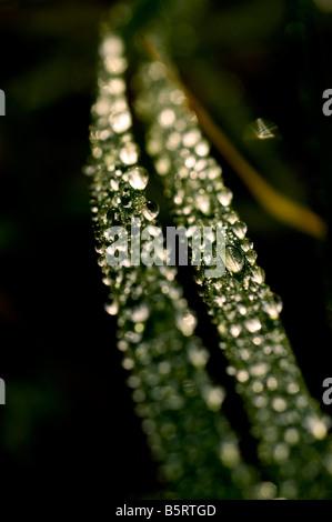 Macro shot of morning dew - Stock Photo