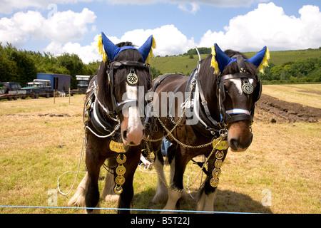 Wiltshire Steam vintage Rally England 2008 heavy Horse Horses - Stock Photo