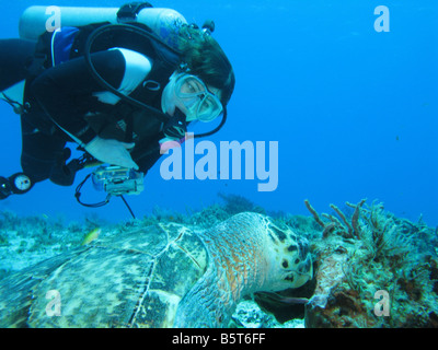 female diver looking at hawksbill turtle - Stock Photo