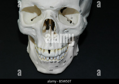 Human skull bone used by forensic medical students at university - Stock Photo